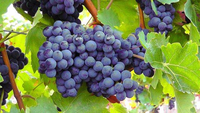 Vína v dávných dobách
